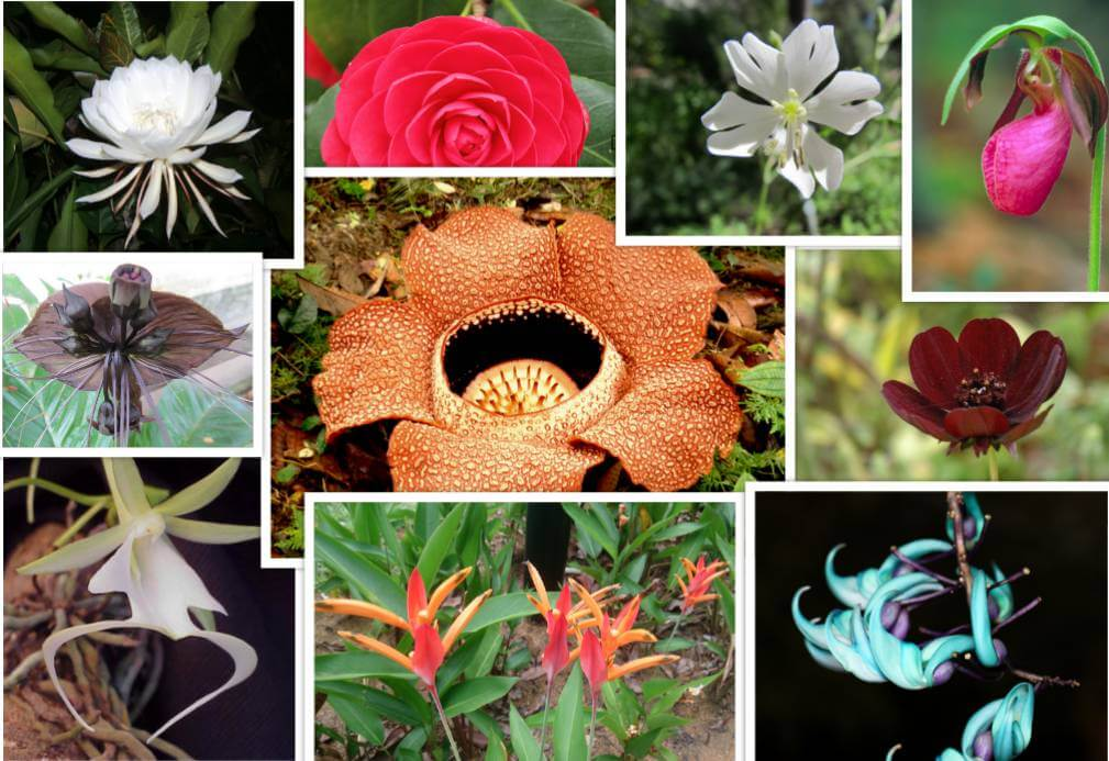 Rare Flowers Which Look Gorgeous